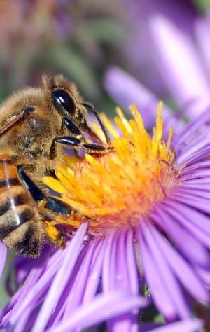 Planten Voor Bijen.Bijen Assortiment Vaste Planten 3 M Bee Happy Vaste Planten