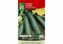 COURGETTE BLACK BEAUTY SUPERBA/928