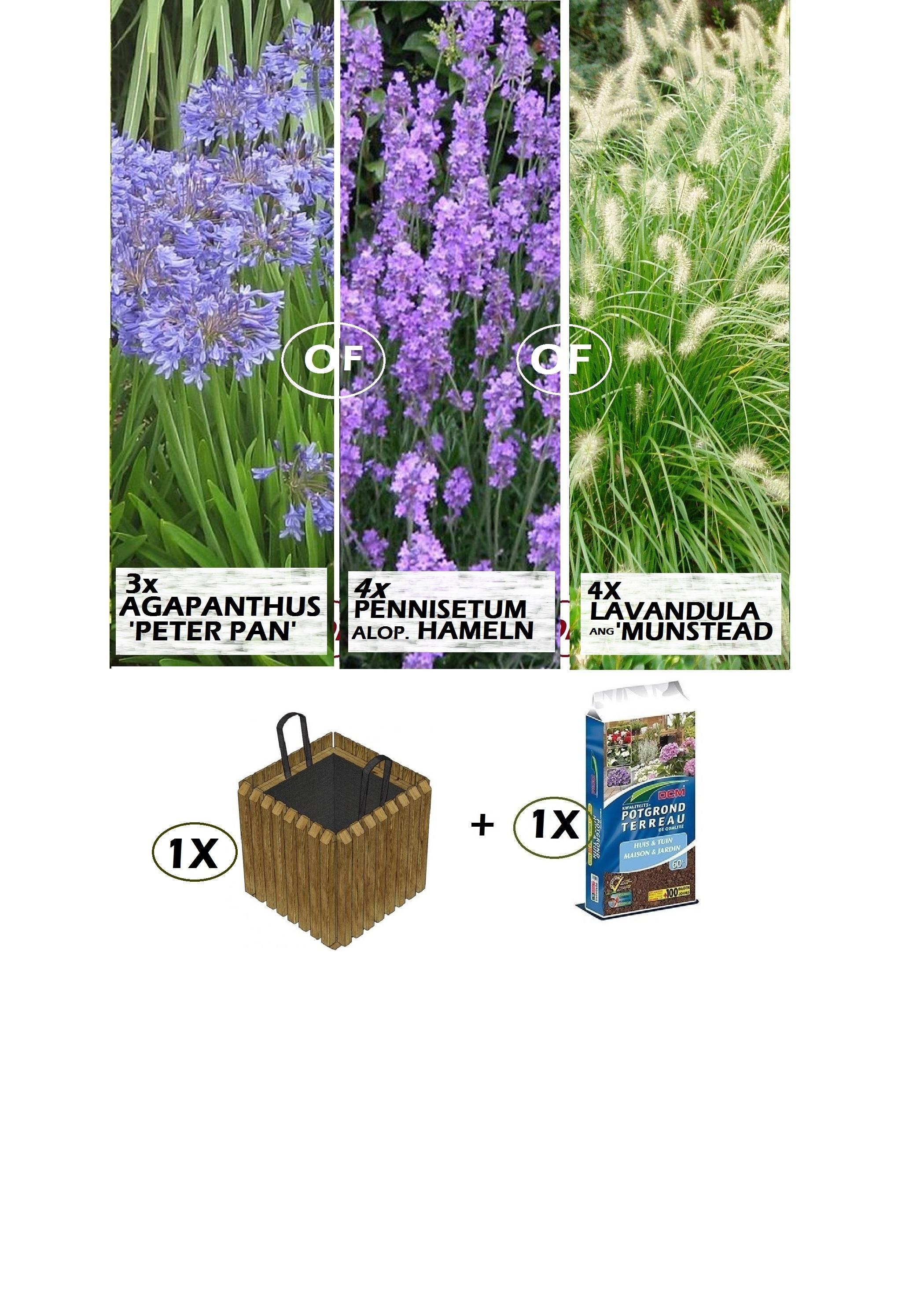 Vaste Planten Voor In Bloembakken Great Witte Bruine